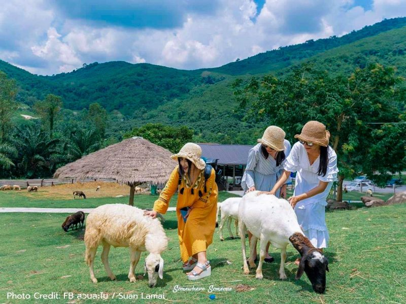 05-สวนละไม-Lamai-Sheep-Farm-Fullcredit