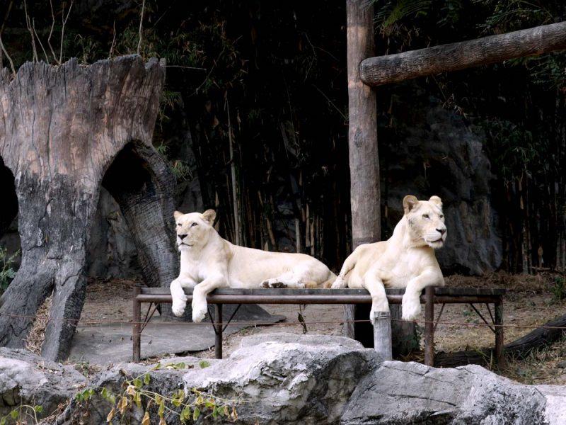 55 สวนสัตว์เชียงใหม่