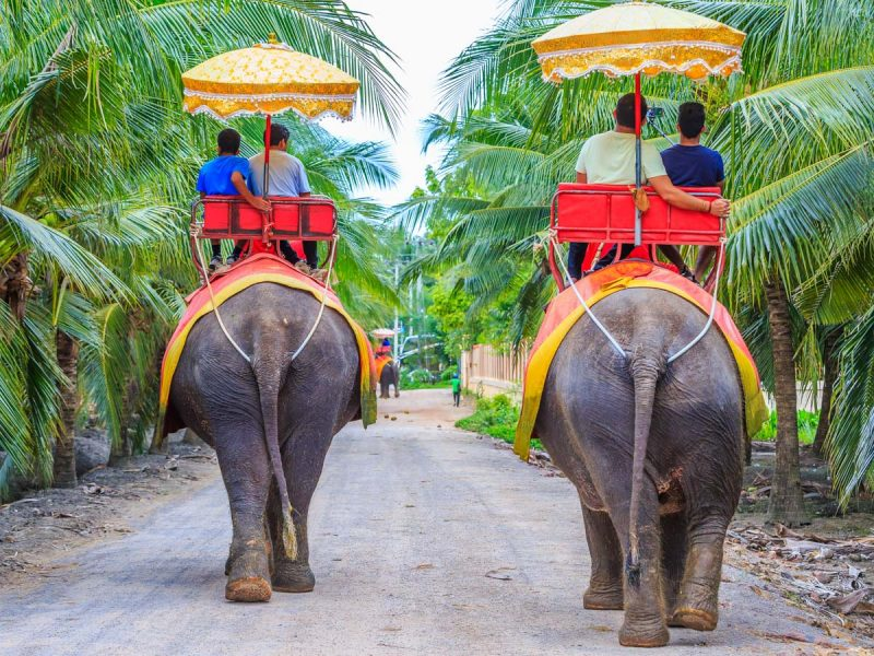 56 ปางช้างเผือกดำเนินสะดวก